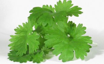 cilantro (coriander) soap taste is genetic